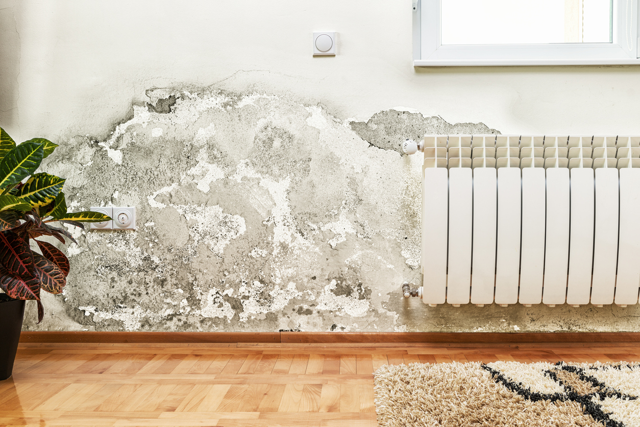 The Risks of Rising Damp in Buildings and What to Do About It