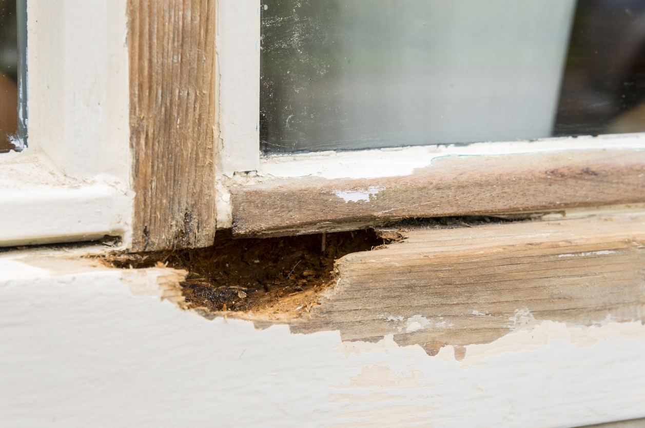Treating Musty Smells In The Home Before Rot Takes Hold