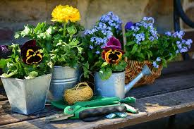 Four Things to Consider Before Starting A Gardening Business