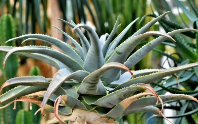 Best Outdoor Plants for Your Garden
