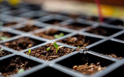 3 Tips When Starting Your Indoor Grow Tent