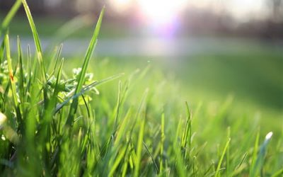 How Often Should You Mow the Lawn?